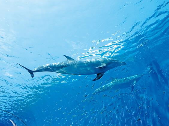 海で泳ぐイルカ